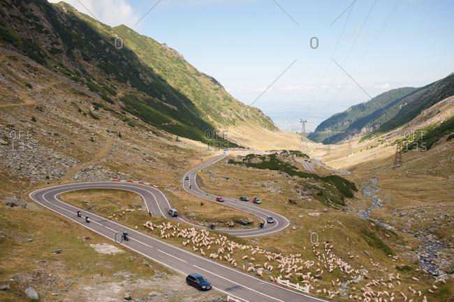 Transfagarasan Pass, Romania - July 22, 2015: Sheep roaming across winding road, Transfagarasan Pass, Romania