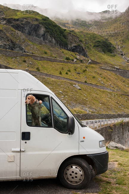 Dog looking out window of van on Transfagarasan Pass, Romania