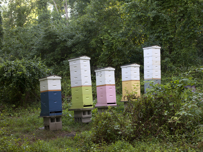 Bee hives in Upper Saddle River, New Jersey