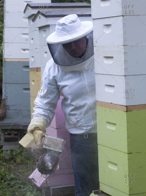 Apiarist working his bee hives in Upper Saddle River, New Jersey