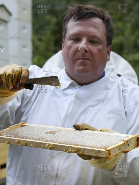 Apiarist, scraping off and checking honey from the bee's waxed slats pulled from his bee hives in Upper Saddle River, New Jersey
