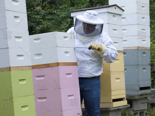 Apiarist working bee hives in Upper Saddle River, New Jersey
