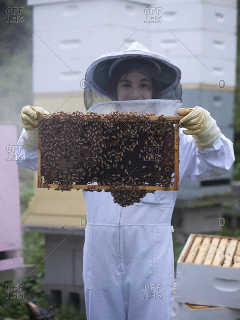 Young apiarist holding slat from Bee Hives in Upper Saddle River, New Jersey
