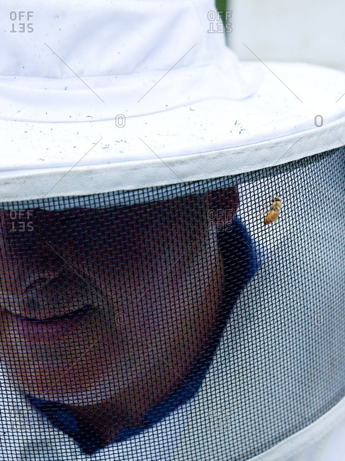 Close up of bee on an apiarist's veil in Upper Saddle River, New Jersey