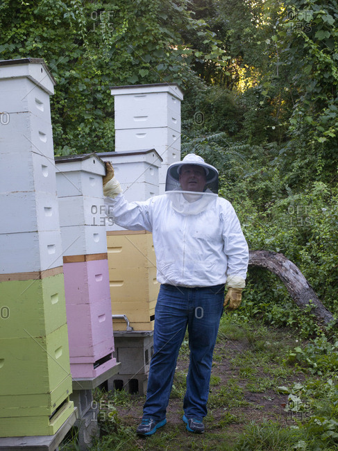 Apiarist at his bee hives in Upper Saddle River, New Jersey