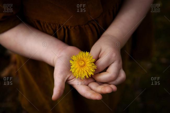 Little girl holding dandelion in her hands