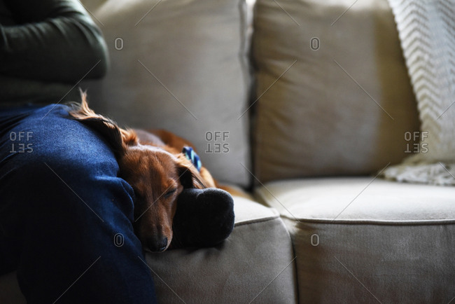 Dog sleeping with his head on man's foot