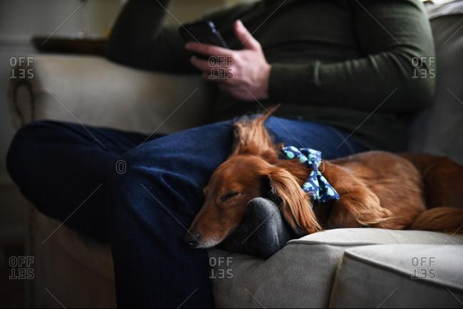 Man on phone while dog sleeps on his foot