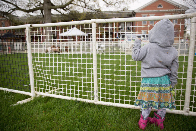 Girl looking through fence at a petting zoo