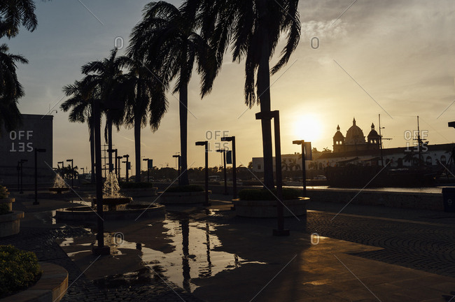 Windy palm trees at sunset in Cartagena de Indias, Colombia