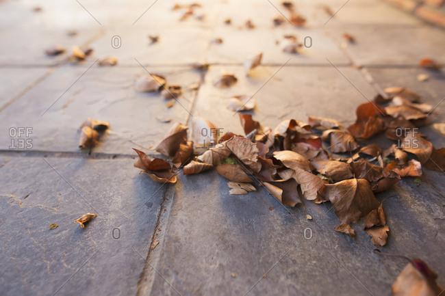 Dead leaves on tile outside