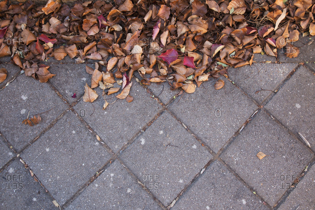 Dead leaves on outdoor tiled ground