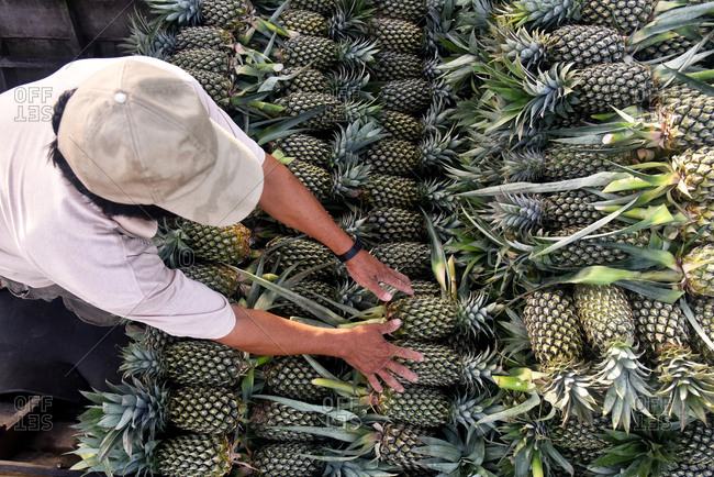 Overhead of male seller arranging pineapples on counter at market