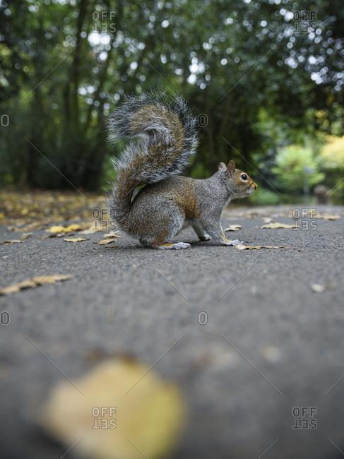 Squirrel walking on ground in a park
