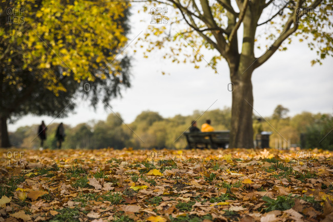 Fallen leaves on the ground in a park in London
