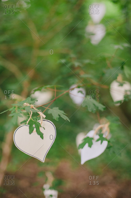 Heart cut outs on a branch