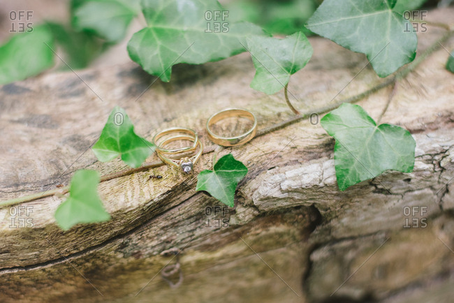 Wedding rings on leaf covered wood