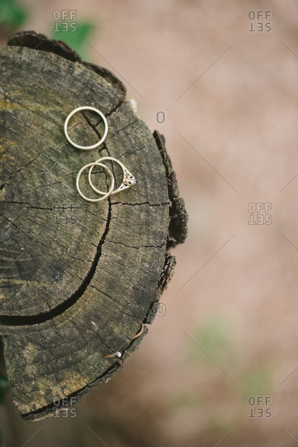 Wedding bands on end of log