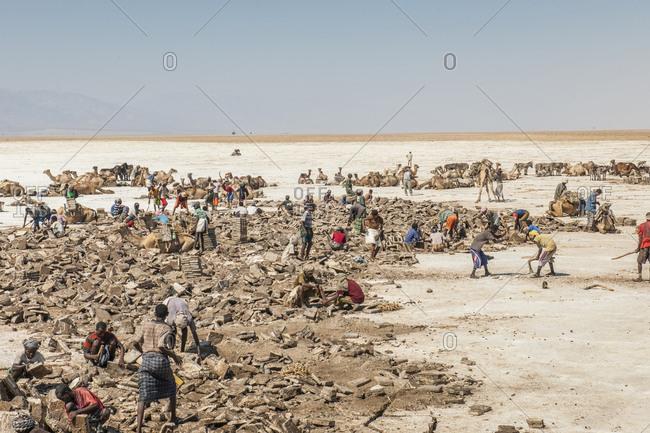 Ethiopia, Tigray - December 4, 2010: Salt extraction at Hamed Ela