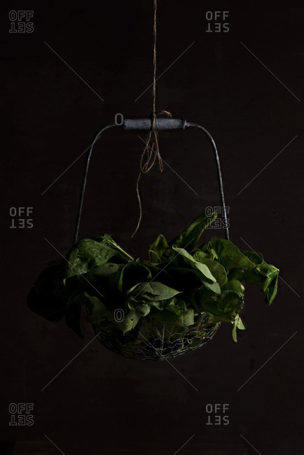 Spinach hanging in a basket