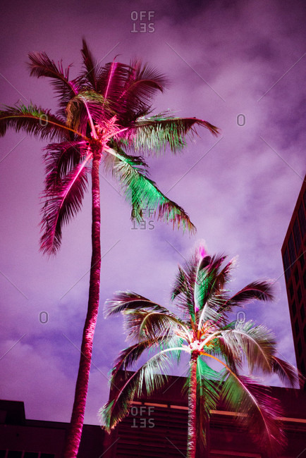 Colorfully lit palm trees against purple sky
