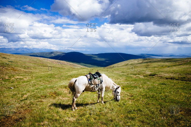 A horse grazes on the rolling plains and hilltops of northern Mongolia