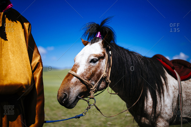 A decorated horse at the traditional Naadam festival in Tsagaannuur, northern Mongolia