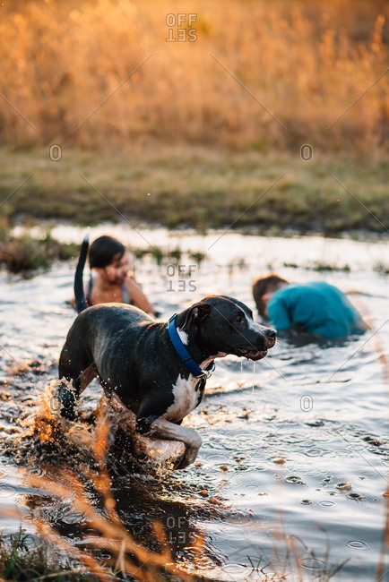 Dog and children playing in puddle at dusk