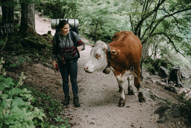 Caucasian woman on forest path with bull
