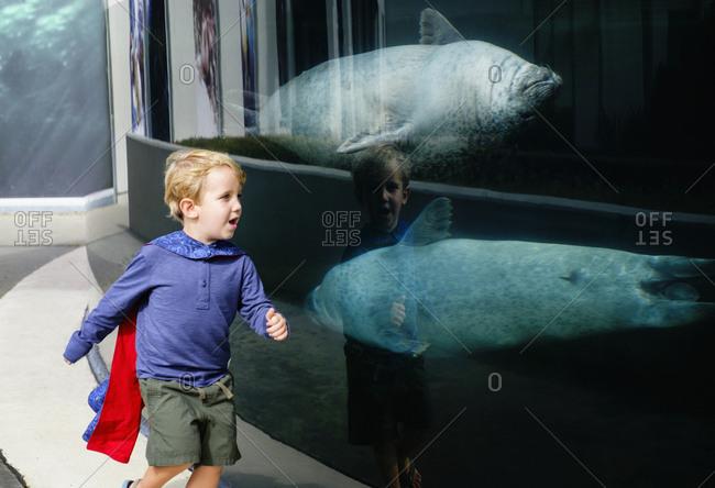 Caucasian boy running in aquarium near swimming seals