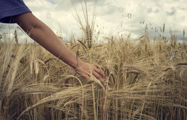 Arm of Caucasian boy in field of wheat