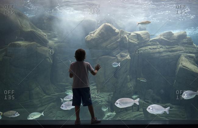Caucasian boy leaning on aquarium tank watching swimming fish