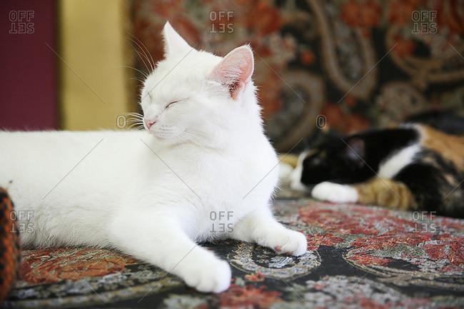 Cats sleeping in cozy surrounding