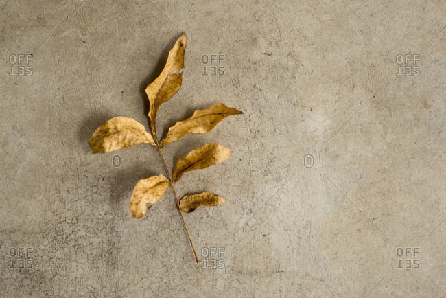 Brown leaves on concrete