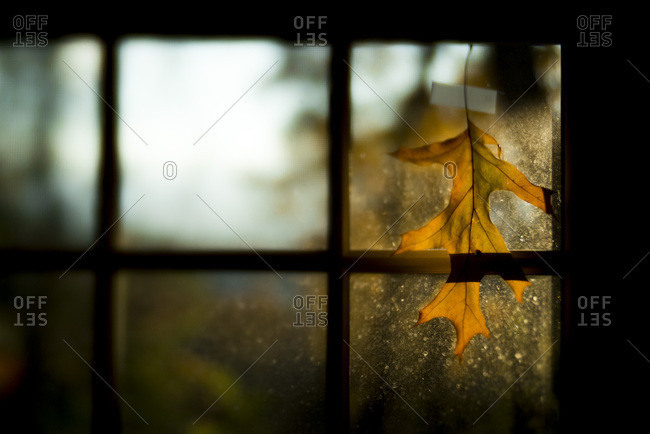 Leaf hanging in window pane