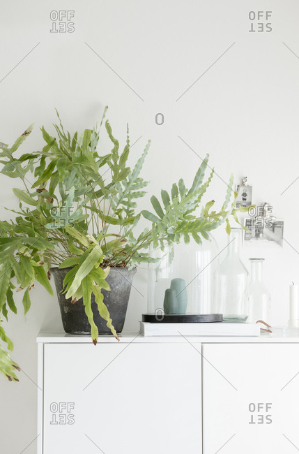 Cabinet topped with plant and glass jars