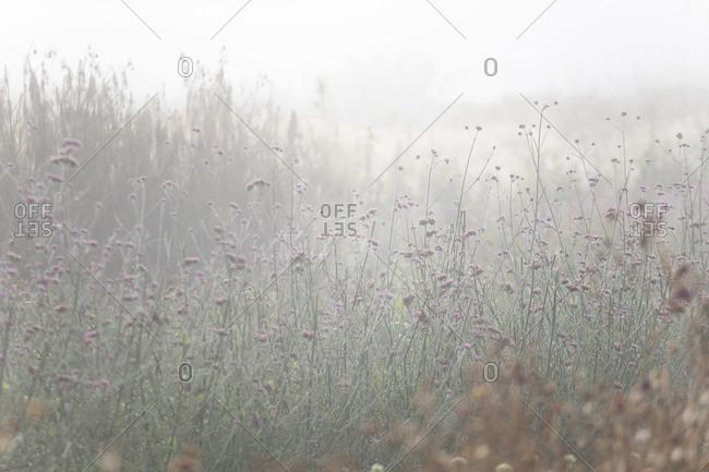 Flowers in a foggy garden in autumn