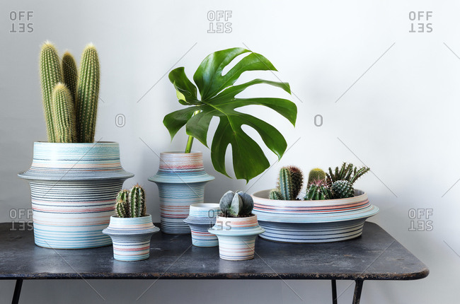 Cactuses and plants in striped pots