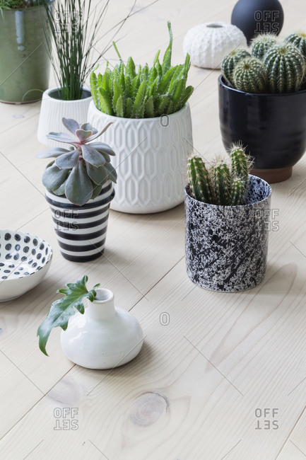 Small potted plants and cactuses