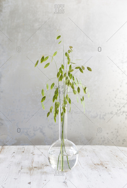 Green weeds in a vase