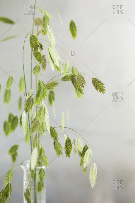 Close up of green weeds on light background