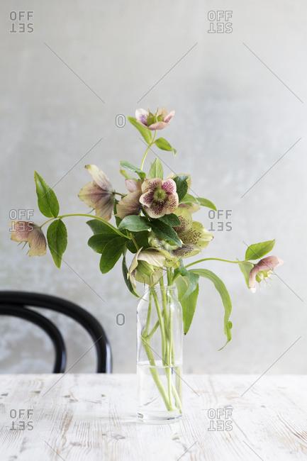 Christmas rose arrangement - Offset Collection