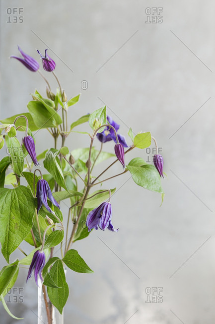 Close up of purple flowers in a vase