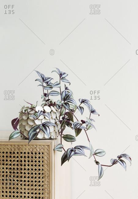 Leafy plant in a flowerpot