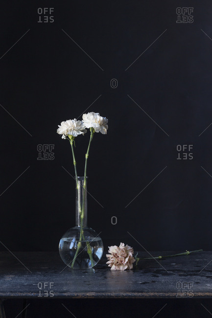 Carnations in a vase on dark background