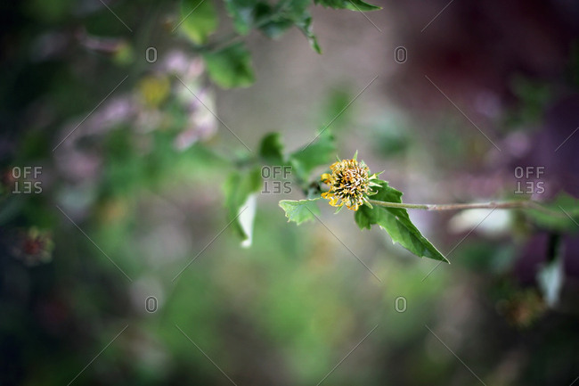 Yellow flower on a branch