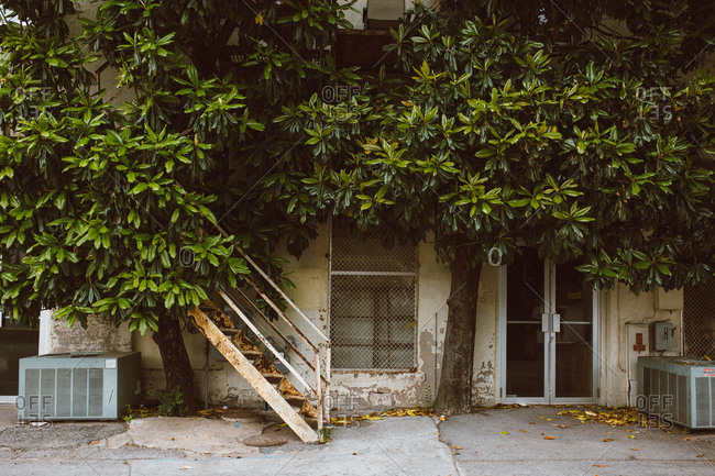Magnolia tree growing next to building in alley