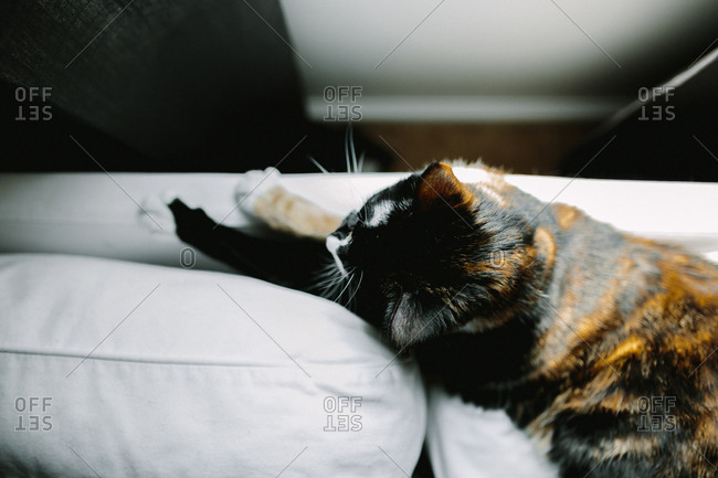 Overhead view of calico cat lying on sofa