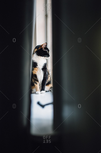Calico cat seen through crack in doorway