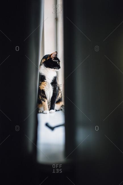 Calico cat seen through crack in doorway